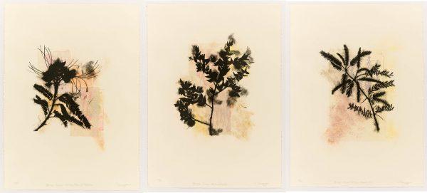 Davidoff 3 print series