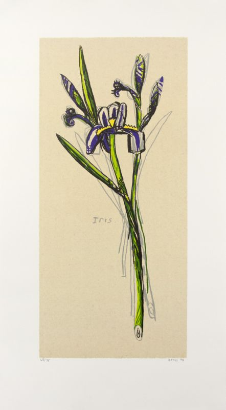 Lithograph by David Bates depicting an iris with green and yellow-green stem with indigo and white petals against a warm cream background. The flower sits at a diagonal from lower right to upper left.