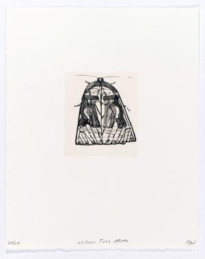 Paula Wilson - Drawing of a moth
